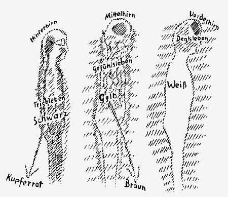 Rudolfo Šteinerio žmogaus rasių modelis